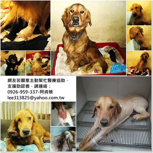 支援助認養,請連絡:0926-959-337-阿肯娘。,20110104