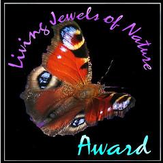 LJoN awards.jpeg