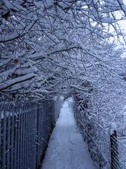 Snow December 2010 004