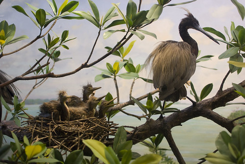 d4 amnh baby birds
