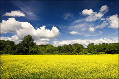 summer in france (heavenuphere) Tags: flowers france yellow landscape 1022mm gi rapeseed ardèche vallonpontdarc rhônealpes gettyfrancesummer