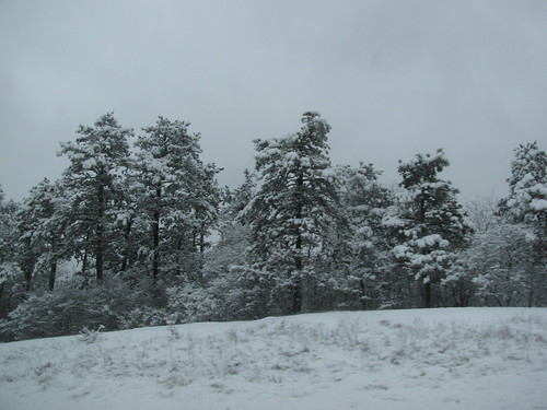 trip pines 2