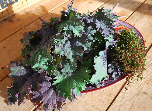 red russian kale 2