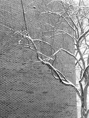 tree, wall