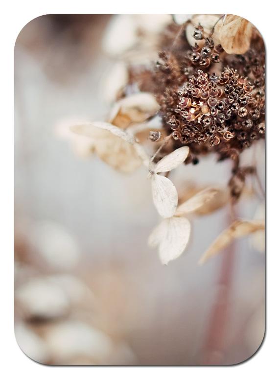 hydrangea color 2 web