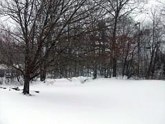 Snow_122710