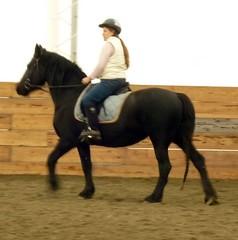 Bombproof Small Friesian (cemcclendon) Tags: horses horse black animal animals mare tags trailriding friesian purebred allaround kidsafe husbandsafe riddenenglish equinenow:user=39607 geo:lat=42435954 geo:lon=1231719976