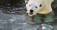 ( (withEverland)) Tags: winter zoo themepark