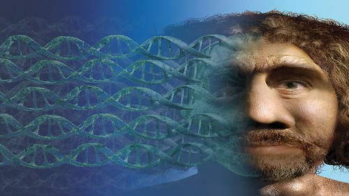 Neanderthal+dna+wikipedia