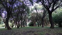 Linden alley (Gjabu) Tags:       lime alley nature park landscape trees