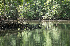 20160130-5C4A0087 (Take-it-easy59) Tags: 2016 30012016 corcovado corcovadoparquenacional costarica npcorcovado nature naturephotography tropicalrainforest tropischregenwoud winter