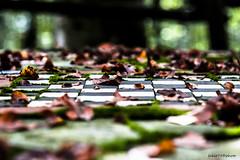 Dama d Autunno (Fabio75Photo) Tags: dama foglie autunno gioco lori bianco nero verde green black white marrone secco freco tavolo scacchi calma
