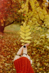 October (obsequies) Tags: october fall autumn leaves leaf seasons colours color bokeh whimsy whimsical manitoba canada harvest orange yellow brown earth tones vintage love life country sweater weather shabby chic grunge halloween magic earthy nature trees change colors colorful chill girl rust red explore walk