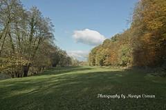 SDIM0230  Autumn (martyn.osman) Tags: trees countryside sigma dp1 diamondclassphotographer flickrdiamond