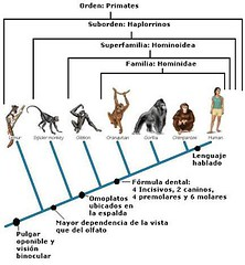 árbol - primates