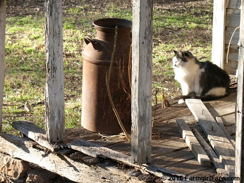 Smudgie on the Old Porch