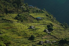 Annapurna Sanctuary (Ziemek T) Tags: nepal village hiking himalayas riceterrace annapurnasanctuary