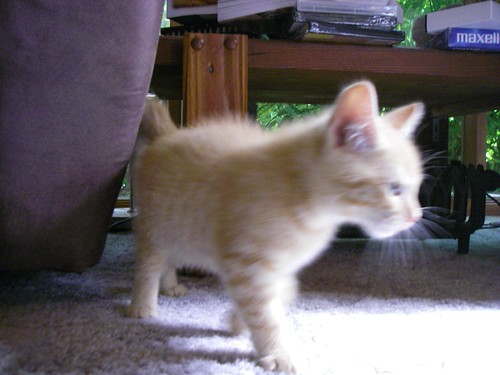 Blurry kitten