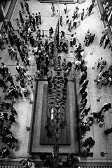 Scale (@richlewis) Tags: england london nature monochrome skeleton hall view dinosaur crowd aerial exhibition kensington naturalhistorymuseum canonefs1755mmf28isusm canoneos7d