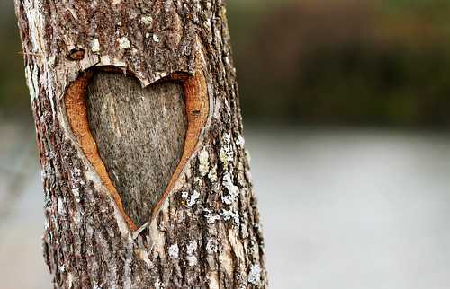 The Loving Tree