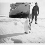 Davis, Antarctica