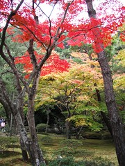 Autumn Kyoto II (nicksevarg) Tags: christmas xmas november autumn red orange lake fall colors japan japanese volcano maple sapporo kyoto hokkaido acer       palmatum  toya  rubrum