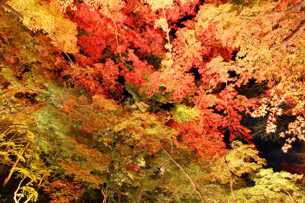 Kitanotenmangu Red Leaf Lightup 2010 (4)