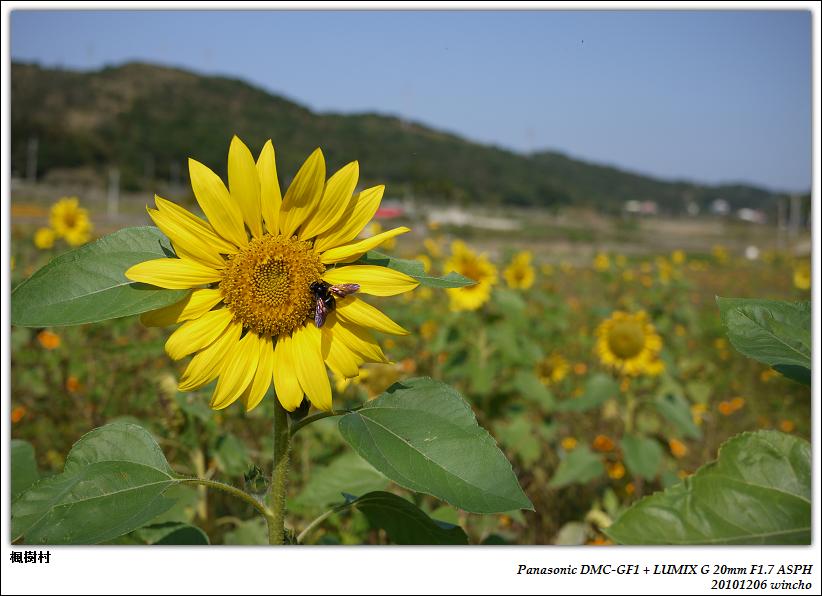 楓樹村-花