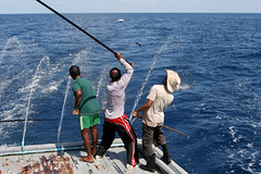 Fishermen in action (m o d e) Tags: travel sea sky people fish photography photo fishing fisherman fishermen shot action line pole explore commercial catch maldives geotag dhoani interestiness geotagmaldives