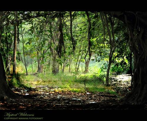 Mystical Wilderness