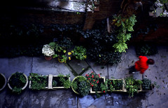 (stereomind) Tags: from above flowers plants hungary budapest olympus xa ksznm bitoutoffocus