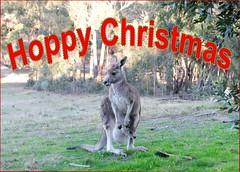 eCard- Christmas Greetings- Kangaroo, Hoppy Christmas