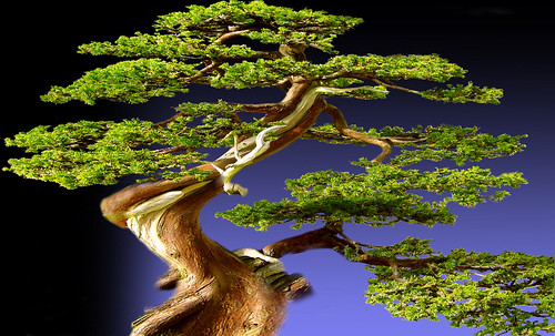 """Bonsai 082 • <a style=""""font-size:0.8em;"""" href=""""http://www.flickr.com/photos/30735181@N00/5261934614/"""" target=""""_blank"""">View on Flickr</a>"""