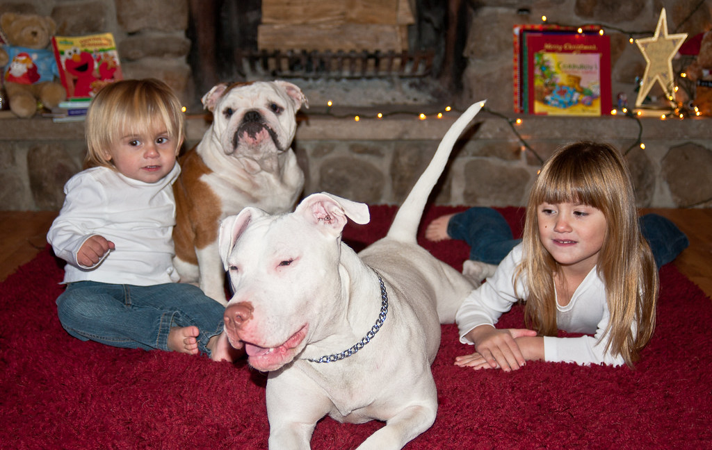 The World\'s most recently posted photos of carpet and pitbull ...