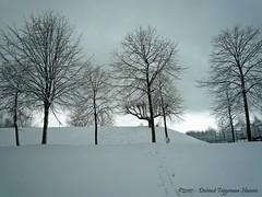 Boomgaardshoek (dietmut) Tags: trees snow bomen rotterdam december sneeuw nederland thenetherlands 2010 zuidholland hoogvliet panasoniclumix boomgaardshoek dmcfx500 dietmut vanuitderijdendetaxi