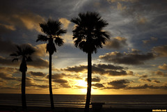 PortoSunset1258 (mcshots) Tags: ocean california autumn sunset sea sky usa beach nature clouds palms losangeles view stock palmtrees socal mcshots
