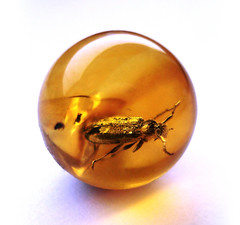 Baltic amber ball - very rare Cerambycidae - body 6 mm