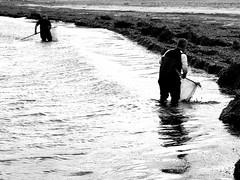 la pesca dell'esca (viaggiaresiii) Tags: light sea bw water mare bn acqua pesca luce lavoro onda riflesso lavorare reti pescatori pescare esca tagviaggia