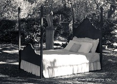 B&W Bed (limelightimaging.com) Tags: blackandwhite art metal bed iron ironwork enchanted metalart
