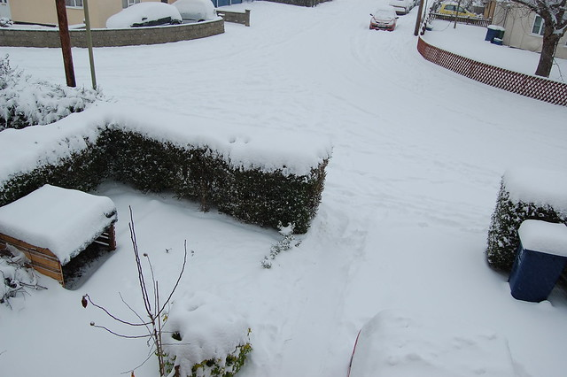 A snowy front garden and street