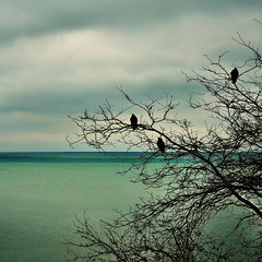 Lake Michigan in Winter (eRachel11) Tags: winter sky lake chicago tree birds clouds nikon freezing lakemichigan conference sillhouettes rsna numb radiology d7000 nikond7000 happyslidersunday myfingersfrozeinthe2secondsittooktotakethispicture
