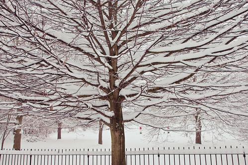 Snow laden
