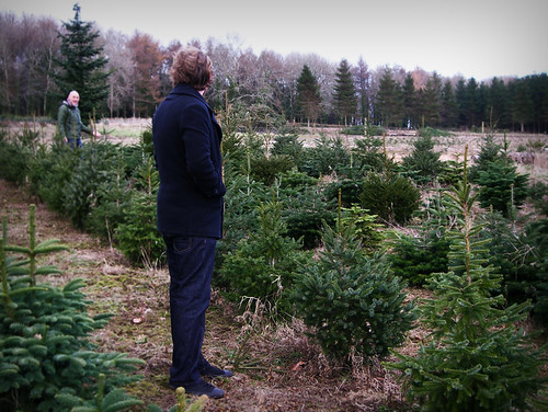 Day 203 - Christmas Tree Shopping