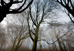 Trees and the Mist, Wales (welshio) Tags: travel autumn trees winter mist tree nature leaves misty fog southwales wales composition contrast forest dark landscapes scary ancient woods flora woodlands scenery quiet gloomy sinister perspective cardiff peaceful eerie calm scan haunted creepy depthoffield spooky views mysterious romantic mystical remote lonely nightmare deciduous ghostly picturesque legacy lightandshadow tranquil atmospheric beech mystic pictorial enchantedforest sleepyhollow treetrunks slhouette beechtrees lightdark classiccomposition naturallandscapes mirkwood mirky deciduouswoods spookyscene britishlandscapes treesinthemist thesecretlifeoftrees bbcwalesnature bbcwalesnaut