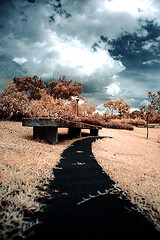 Infrared Photography. (HUANG.) Tags: blue sky tree grass yellow canon lens asian ir photography golden l