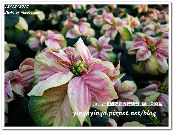 2010花博_圓山公園區 精緻花卉區 991212_R0016690