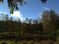 Verde y azul (konde02) Tags: trees sky blur field grass rboles cloudy cielo desenfoque nubes campo gaussian multiply ourense hierba orense multiplicar gaussiano ocarballio ortoneffect efectoorton