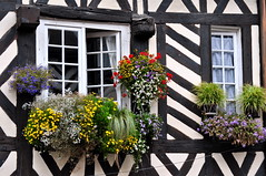 Je me demande pourquoi on voit tant de photos de neige en ce momentI wonder why we see so many snow pictures this time (Michele*mp) Tags: flowers france window fleurs europe august normandie honfleur normandy fentre paysdauge calvados halftimbered aot colombages michelemp