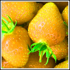 Yellow strawmarine fields - forever (LeWaggis) Tags: nonsense hue fraise sowhat schtroooohbhry