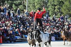 Riding Backwards! (Calsurferboy) Tags: horses usa cowboy parade socal backwards pasadena roseparade rider coloradoblvd 2011 twohorses horsetricks